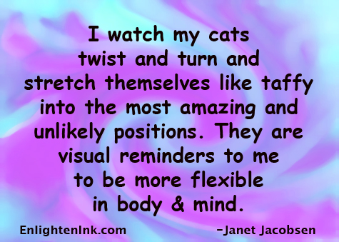 I watch my cats twist and turn and stretch themselves like taffy into the most amazing and unlikely positions. They are visual reminders to me to be more flexible in body and mind.